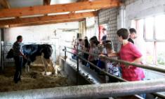 Eine Kuh macht Muh, viele Kühe machen Mühe!